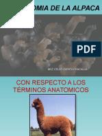 Anatomia Especial de Las Alpacas