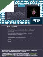 Neuron As