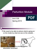AnS536 Module 7 - Parturition