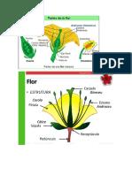 Flor(Campo obligatorio)