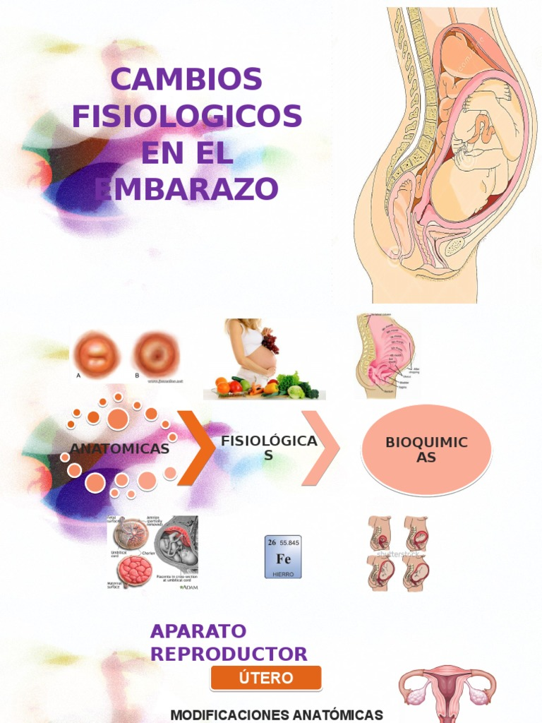 AUMENTO DE PESO DURANTE EL EMBARAZO » MD.Saúde