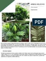 Filicium decipiens.pdf