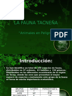 la-fauna-tacnea-1221799114180278-8