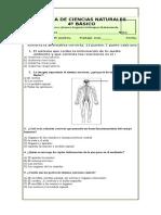 prueba sistema nerviosos 4°