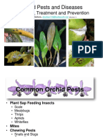 Orchid Pests and Diseases by Sue Bottom