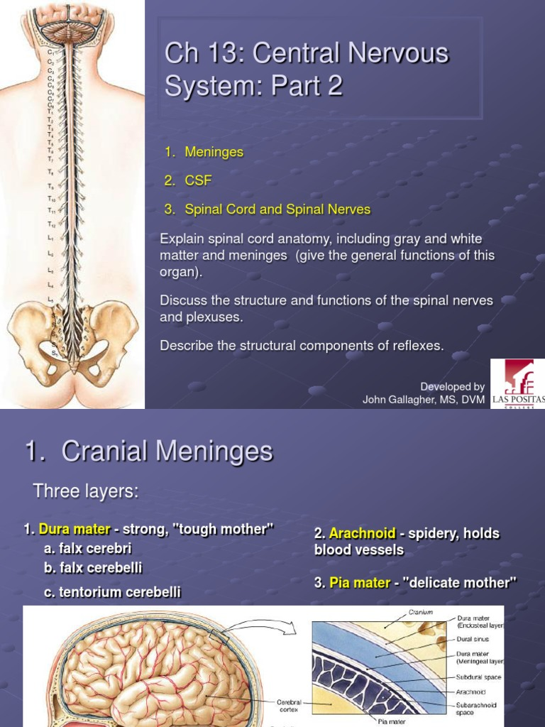Anatomi Chapter13cnspart2marieb Cerebrospinal Fluid Spinal Cord