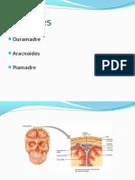 Meninges y Liquido Cerebroespinal