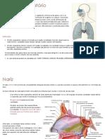 Sistema Respiratório C- Exercícios