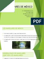 MANGLARES DE MÉXICO.pptx