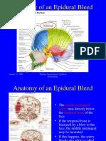 Anatomi Epidural