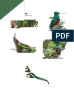 5 Imagenes Del Quetzal Hasta 3 Poemas Al Quetzal