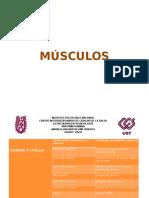 Presentacion Musculos y Huesos