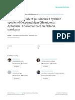 El estudio microscópico de agallas inducidas por tres especies de Geopemphigus (Hemiptera