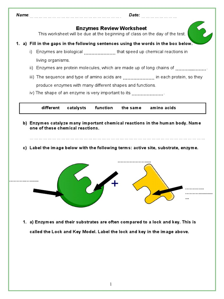 enzymes review packet 2 Digestion – Enzyme Worksheet