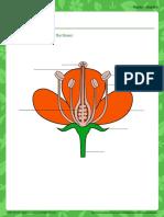 flowery-parts.pdf