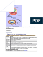 Esta Sencilla Representación Muestra Parecidos y Diferencias Generales Entre Las Células Aucariotas y Procariotas