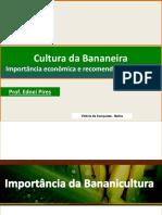 Cultivo de Bananeiras
