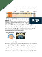 Interaksi Protein Dna
