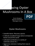 Growing Oyster-1.pdf
