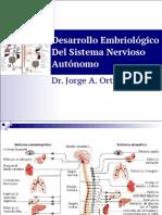 Desarrollo embriológico del SNA