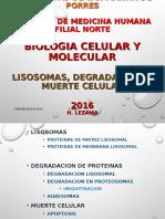 Bcm 16 Chi 06 Lisosomasdegradacionmuerte Heli (1)
