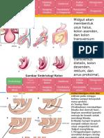 Referat Tumor Kolon