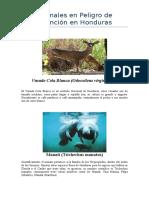 Animales en Peligro de Extinción en Honduras.docx