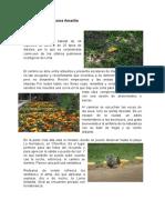 Flora y Fauna en Loma Amarilla