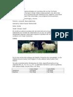 zootecnia-ovejas.docx