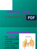 adrenal.ppt