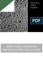 Cours-Medecine Info-Histologie-Jonctions Serrees Et l Organisation Des Epitheliums