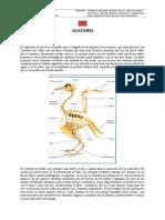 UNIDAD 2 - Anatomia