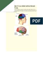 El Cerebro y La Discapacidad Intelectual