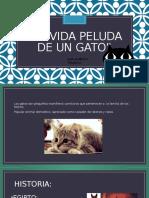 La Vida Peluda de Un Gato