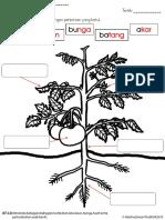 Labelkan bahagian tumbuhan.pdf