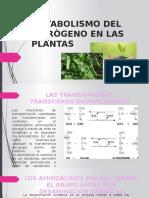 Metabolismo Del Nitrògeno en Las Plantas