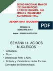 Purinas - bioquimica