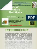 Artemisia Absinthium Diapossss