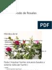 Pode de Rosales