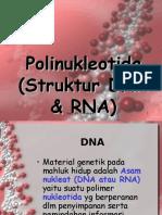 KUL 1 Struktur Dna