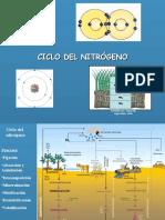 ciclo del nitrogeno.ppt