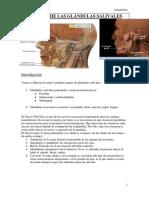 420 2014 02-26-06 Glandulas Salivales