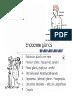 11 Endocrine Glands
