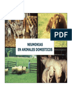 4-Argentina Ejemplos Pneumonias
