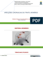 13- Afecções do trato urinário(1).pdf