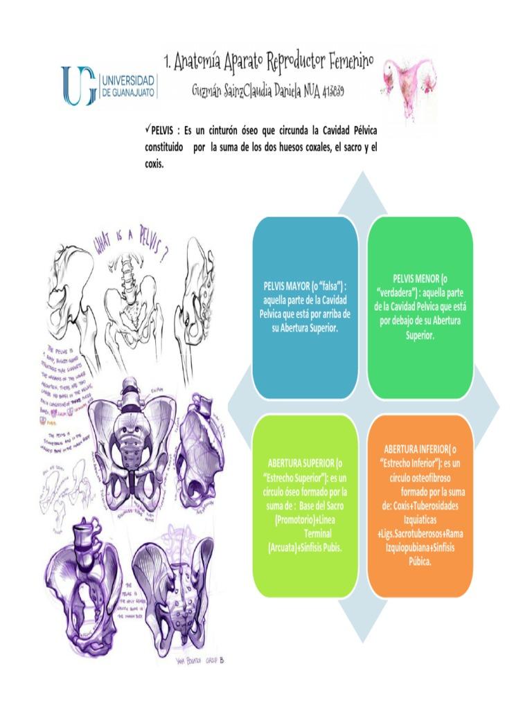 1. Anatomía Aparato Reproductor Femenino