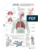 Sistema Respiratorio, Imagen 3