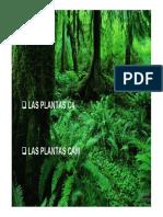 Tema 17- Nutricion Autotrofa III. Asimilacion Del c en Plantas c4 y Cam