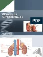 glandula suprarrenal