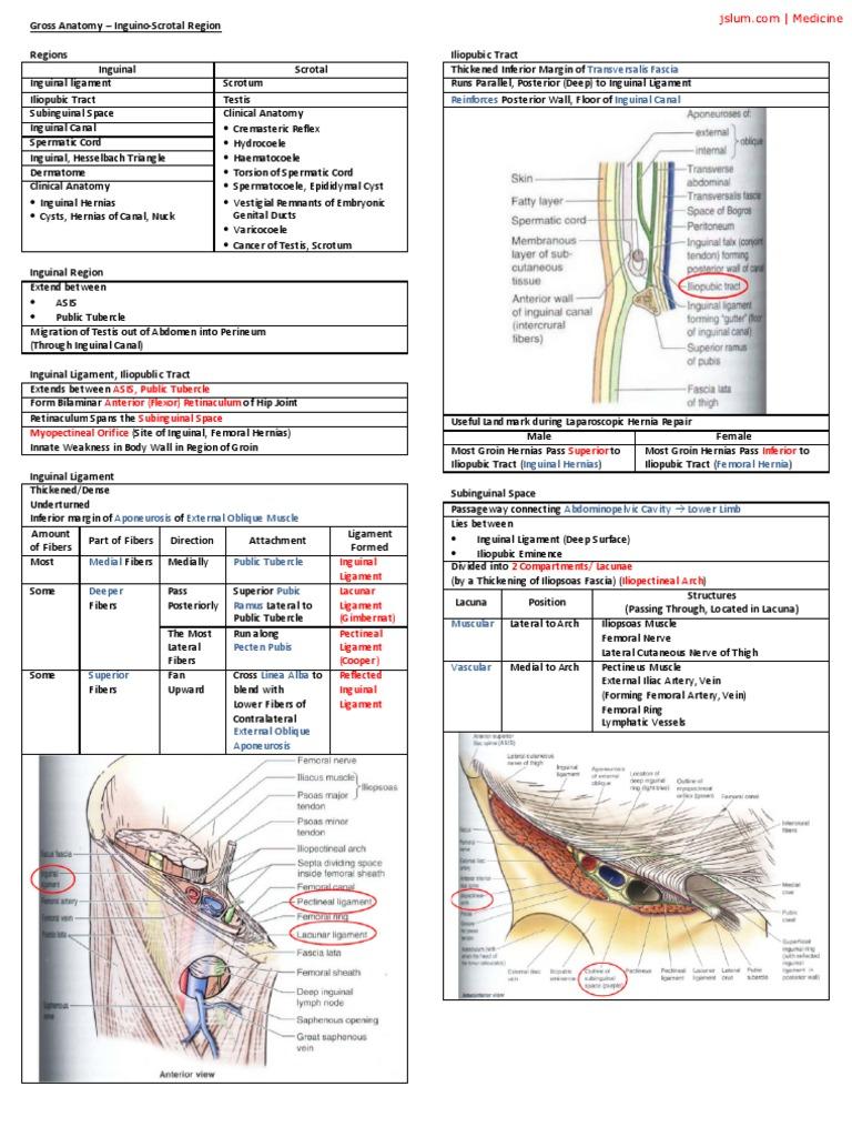 Gross Anatomy Inguino Scrotal Region | Human Leg | Abdomen